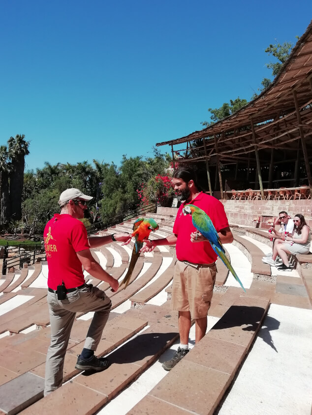 Two men holding parrots during a show at Jungle Park Tenerife
